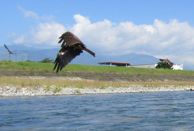 天竜川とんび3