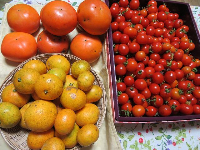 ミニトマトまだ熟れてます 27.10.23