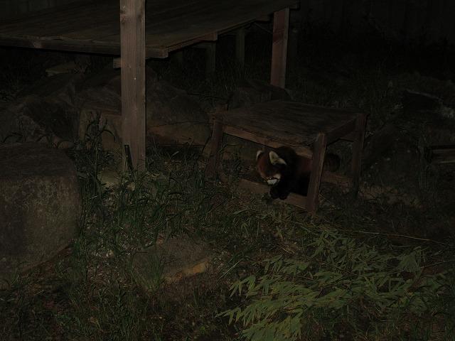 徳島夜の動物園 27.9.19