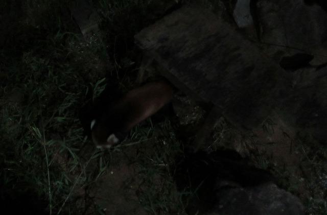 夜の動物とくしま動物園 27.9.19