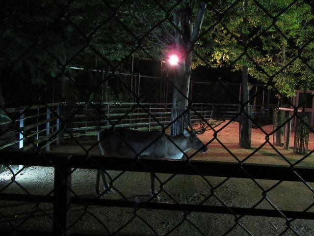 とくしま動物園 夜の動物 27.9.19