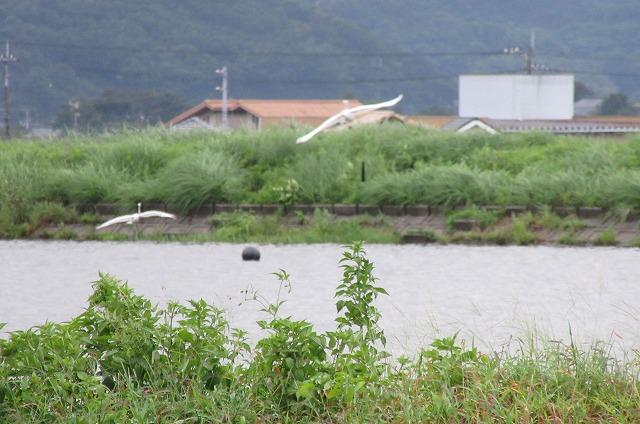 白い鳥逃げる 27.9.24