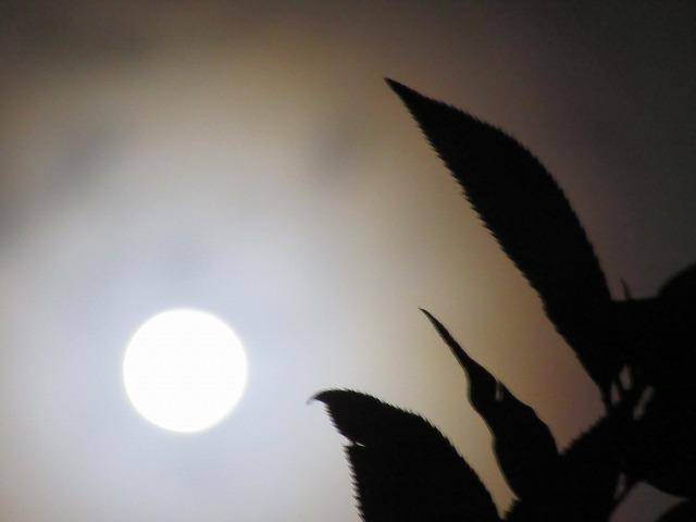 桜の葉とお月様 27.9.28