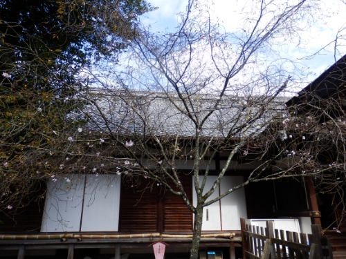 平野神社 (4)_resized