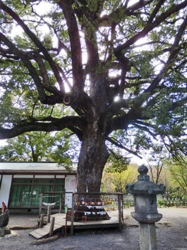 平野神社 (1)_resized