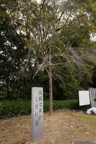 9桜 (800x1200)