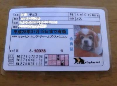 チョコちゃんの免許証