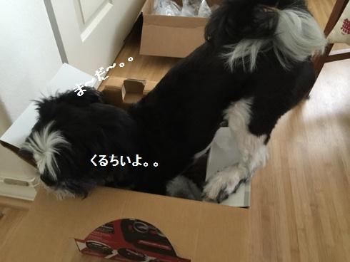 IMG_5291moji.jpg