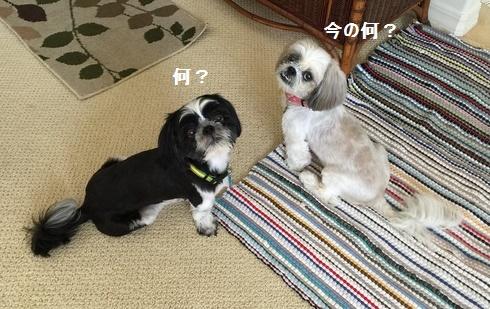 IMG_5308moji.jpg