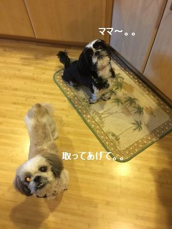 IMG_5569moji.jpg