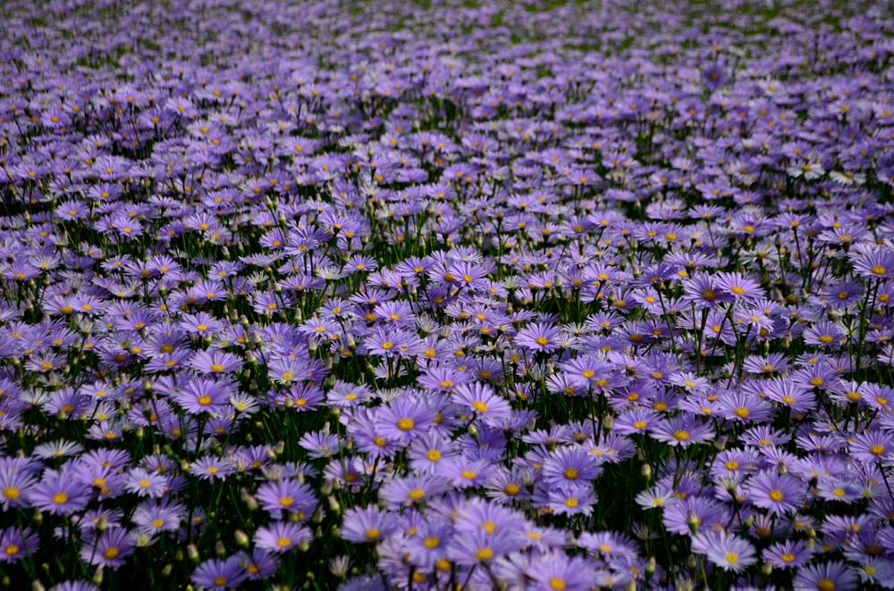 _満開の花メール用DSC_4175