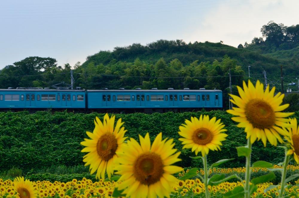 _ひまわりと列車DSC_4481