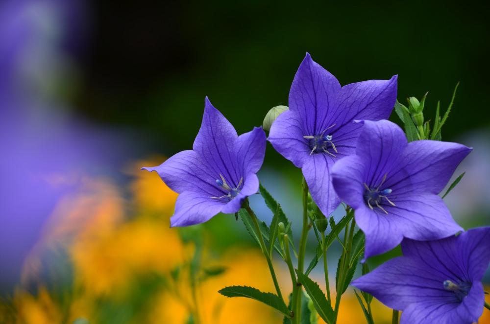 _黄花と黒い背景DSC_4065