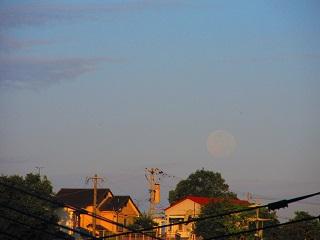 翌朝の月。
