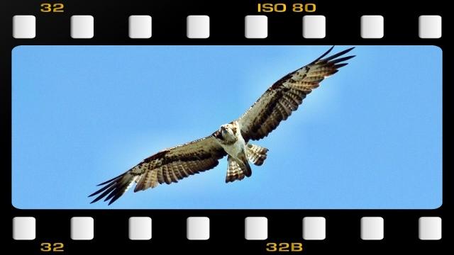 DSC_56y (640x360)