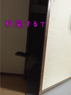 とめのきち4