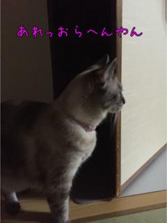 とめのきち6