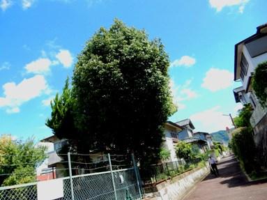 ookinaki5.jpg
