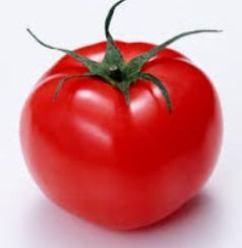 tomato7gatu2.jpg