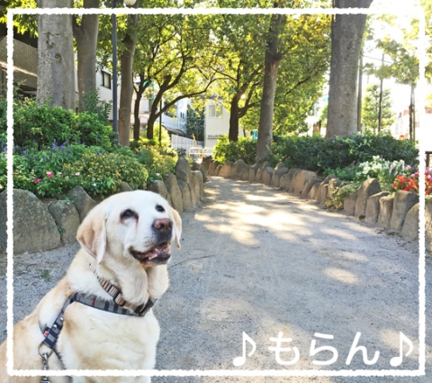 151007 秋晴れ散歩-2