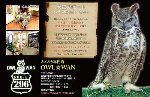owl_nagorep2015_2.jpg