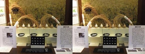 菊正宗酒蔵記念館⑩(平行法)