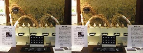 菊正宗酒蔵記念館⑩(交差法)