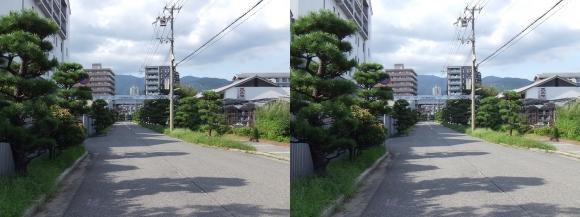 櫻正宗記念館「櫻宴」⑬(平行法)