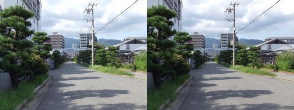 櫻正宗記念館「櫻宴」⑬(交差法)
