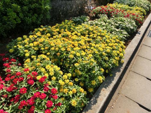 ホームセンターの花壇1