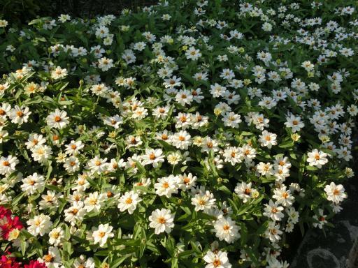 ホームセンターの花壇3
