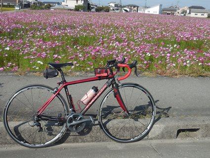 コスモスと自転車