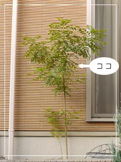 garden2015-100.jpg