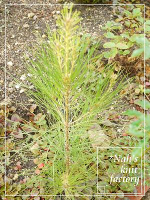 garden2015-106.jpg