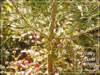 garden2015-108.jpg