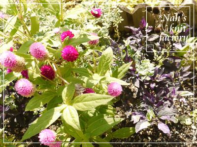 garden2015-95.jpg