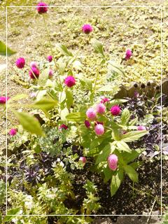 garden2015-96.jpg