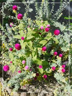 garden2015-97.jpg