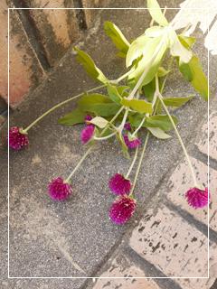 garden2015-98.jpg