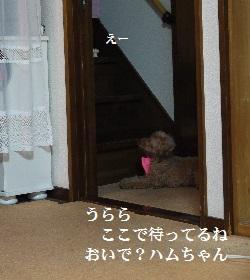 P1410101(1).jpg