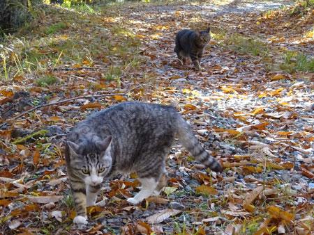 秋のお散歩7