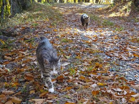 秋のお散歩8