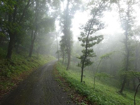 霧で見えない朝4