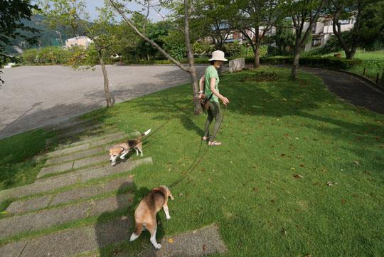 022朝の散歩