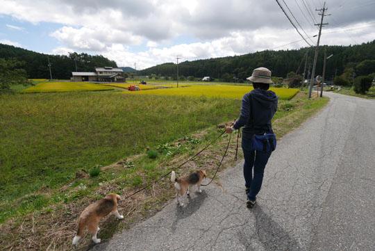 108田舎の散歩