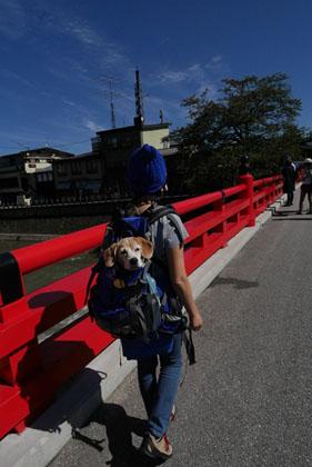 011徒歩で中橋
