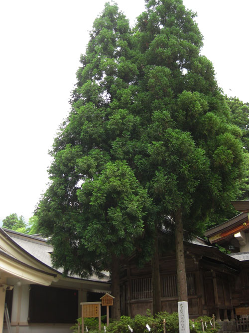 白山比咩神社01-32