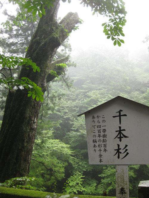 鞍掛岩・千本杉・水琴窟04