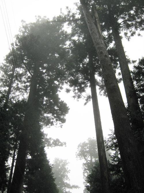 鞍掛岩・千本杉・水琴窟06