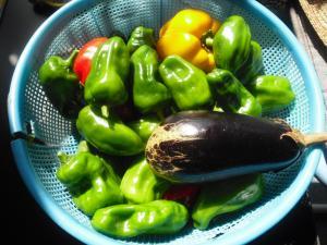 10-6収穫
